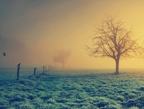 8-passos-simples-para-uma-vida-mais-frutifera